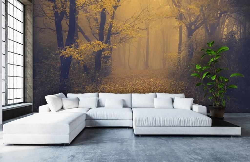 Forest wallpaper - Dark forest - Bedroom 6