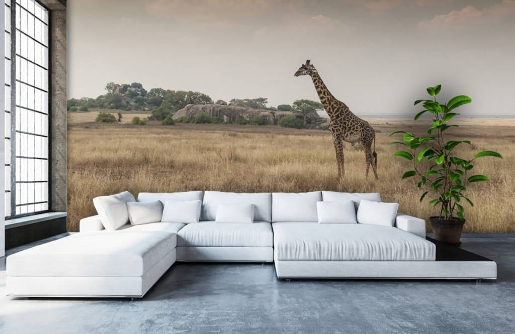 Animals - Giraffe on a savannah - Bedroom 1
