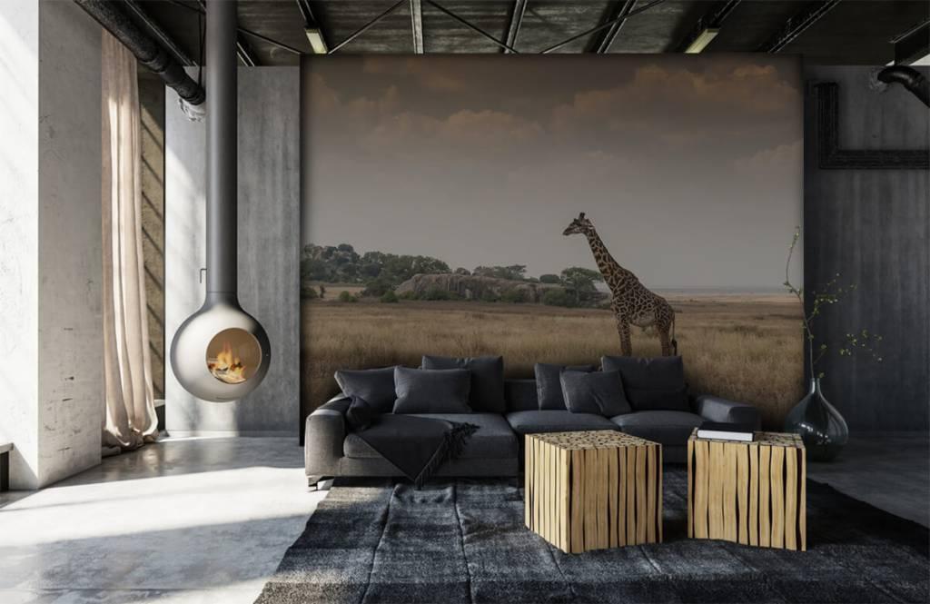Animals - Giraffe on a savannah - Bedroom 2
