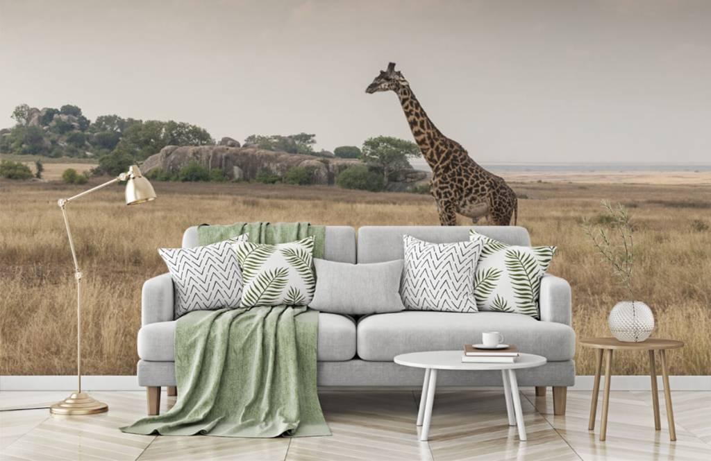 Animals - Giraffe on a savannah - Bedroom 3