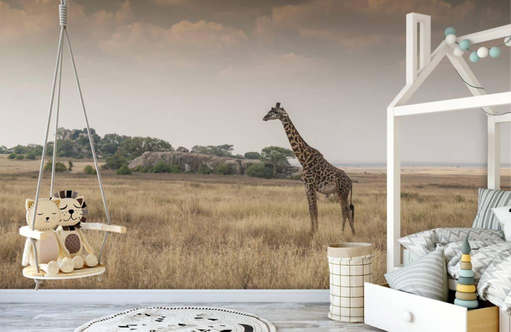Animals - Giraffe on a savannah - Bedroom 5