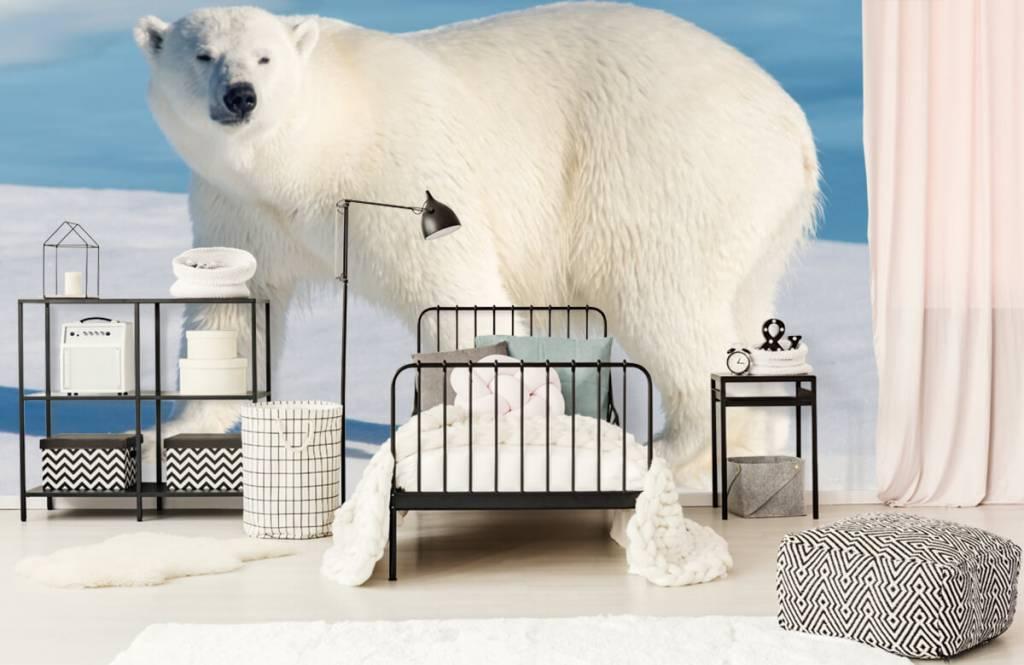 Other - Polar bear - Children's room 1