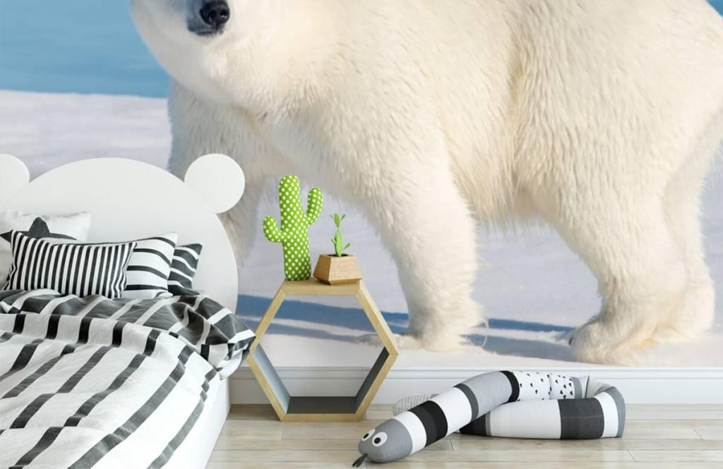 Other - Polar bear - Children's room 2