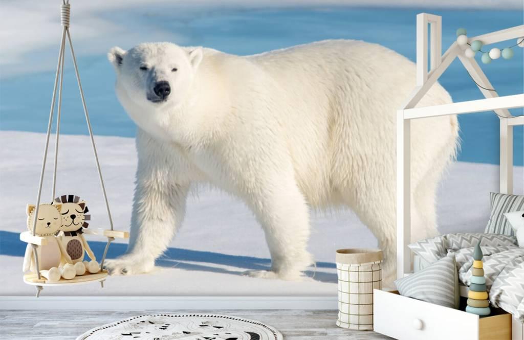 Other - Polar bear - Children's room 3