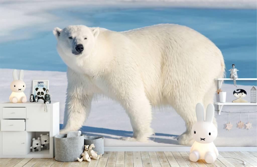 Other - Polar bear - Children's room 4