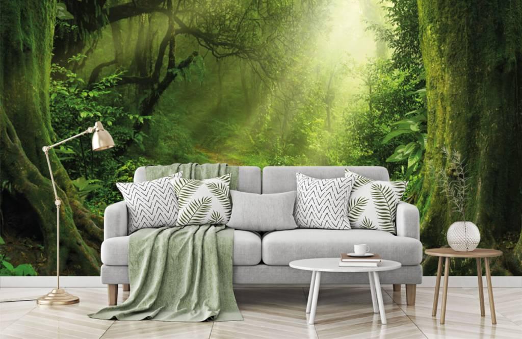 Trees - Jungle with sunbeams - Bedroom 1