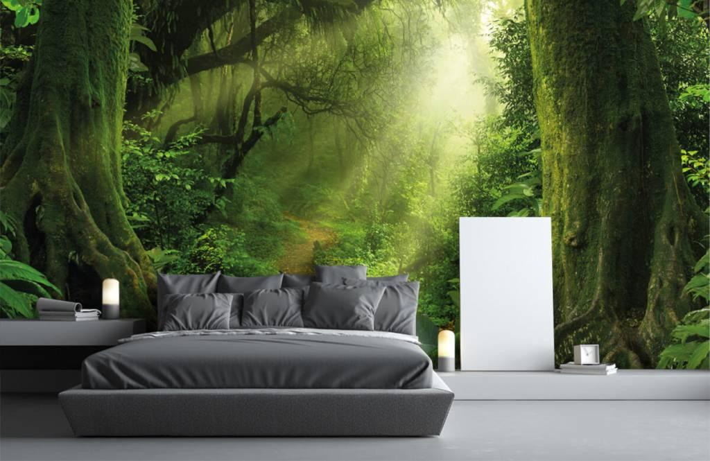 Trees - Jungle with sunbeams - Bedroom 3