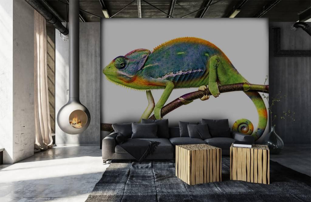 Other - Chameleon - Children's room 1