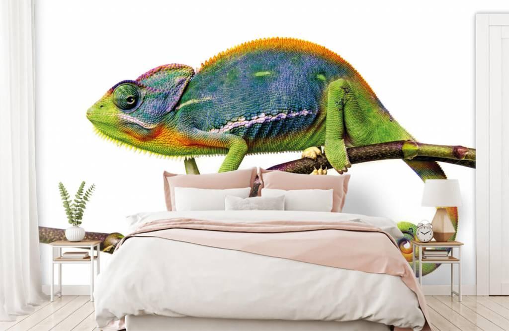Other - Chameleon - Children's room 2