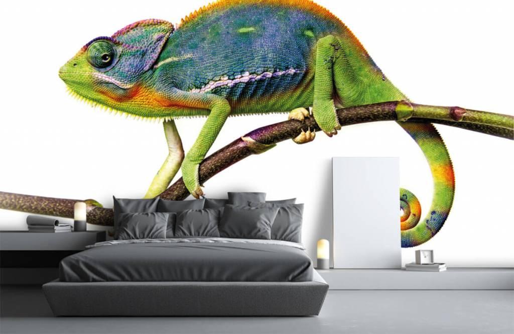 Other - Chameleon - Children's room 3
