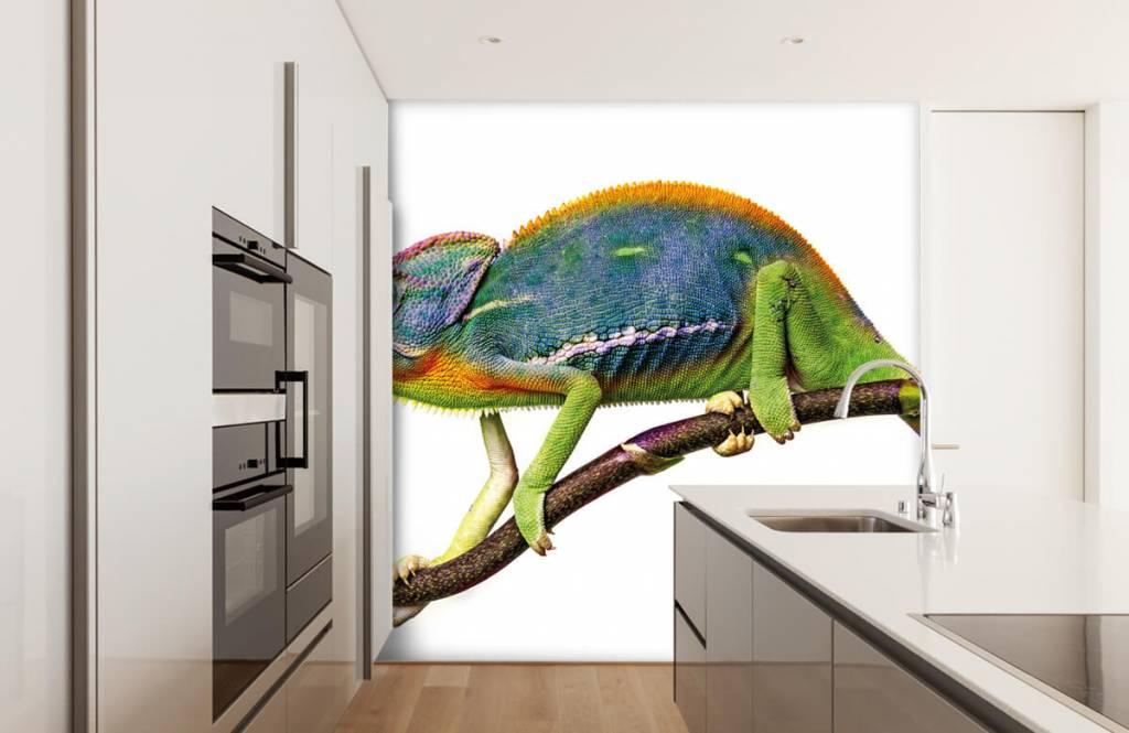 Other - Chameleon - Children's room 4