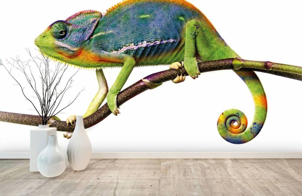 Other - Chameleon - Children's room 8