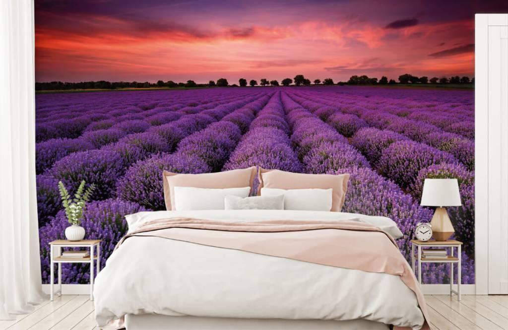 Flower fields - Lavender field - Bedroom 1