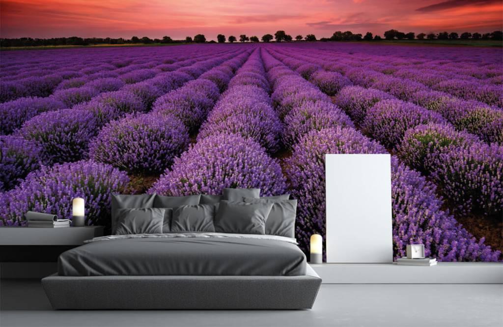 Flower fields - Lavender field - Bedroom 2