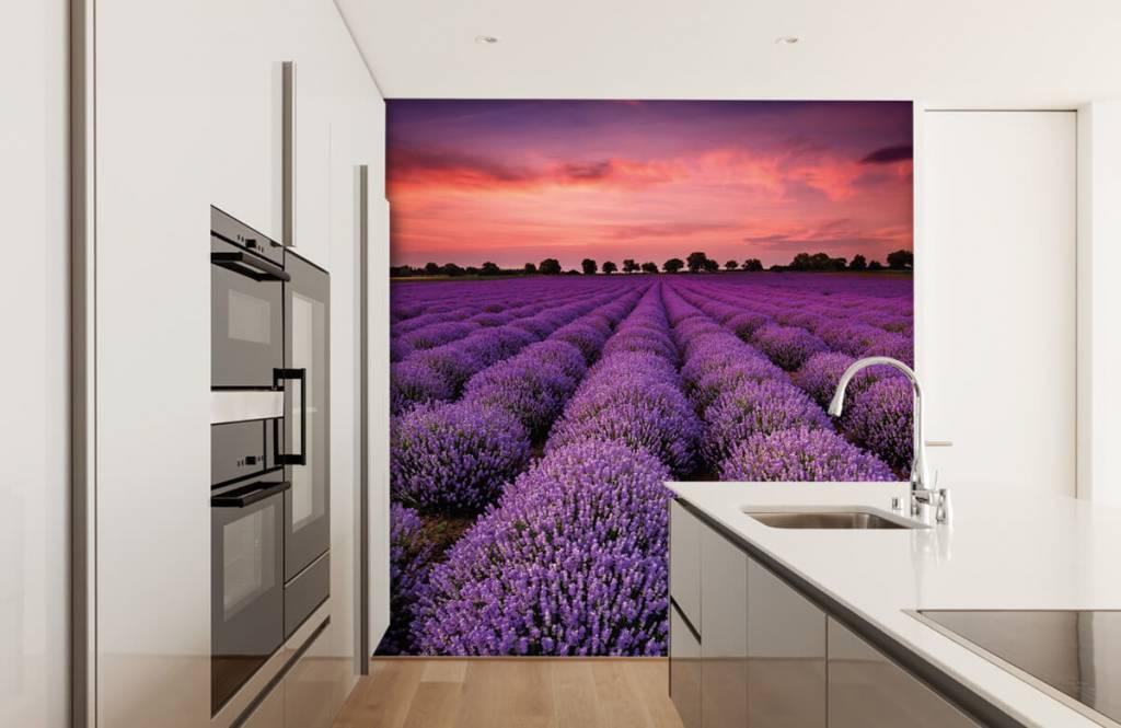 Flower fields - Lavender field - Bedroom 3