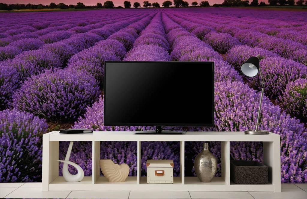 Flower fields - Lavender field - Bedroom 4