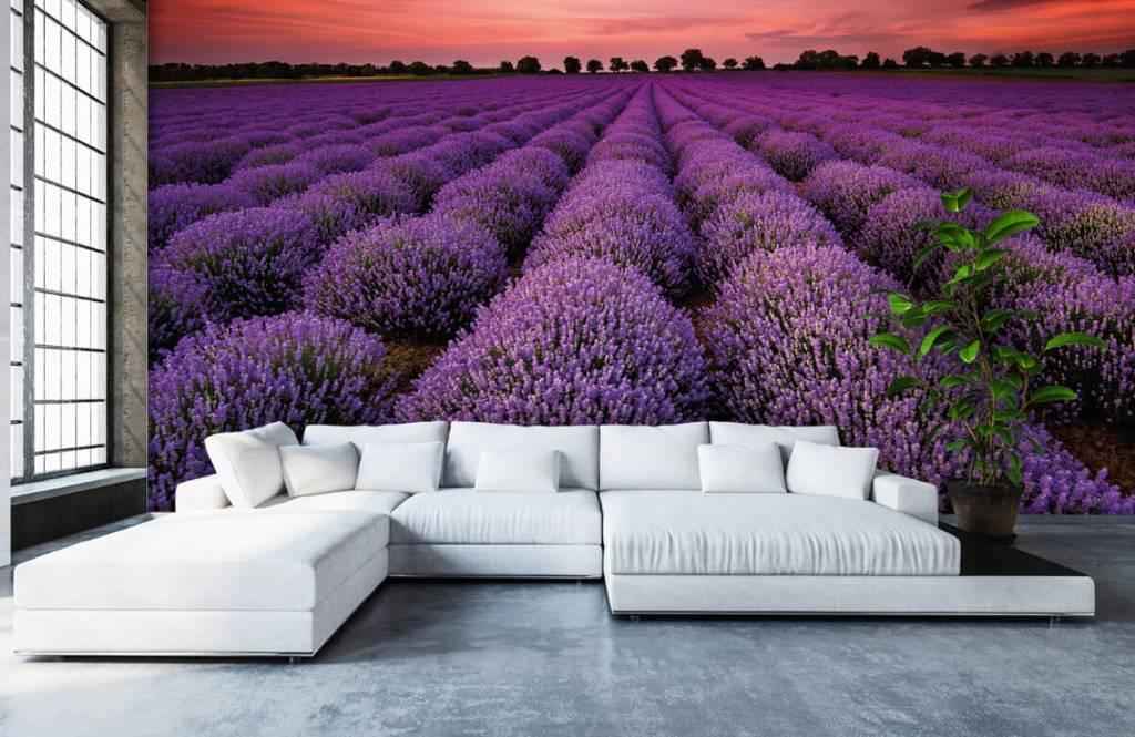 Flower fields - Lavender field - Bedroom 5