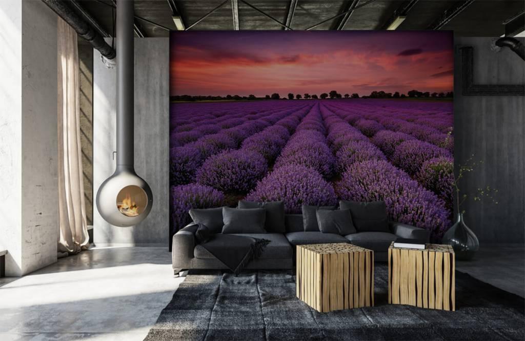 Flower fields - Lavender field - Bedroom 6