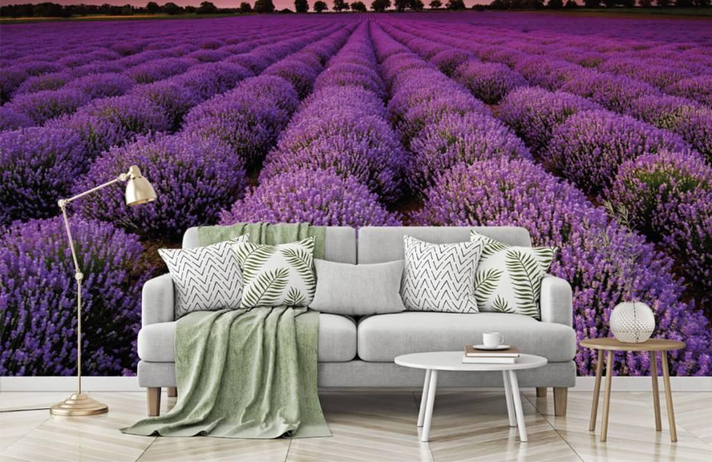 Flower fields - Lavender field - Bedroom 7