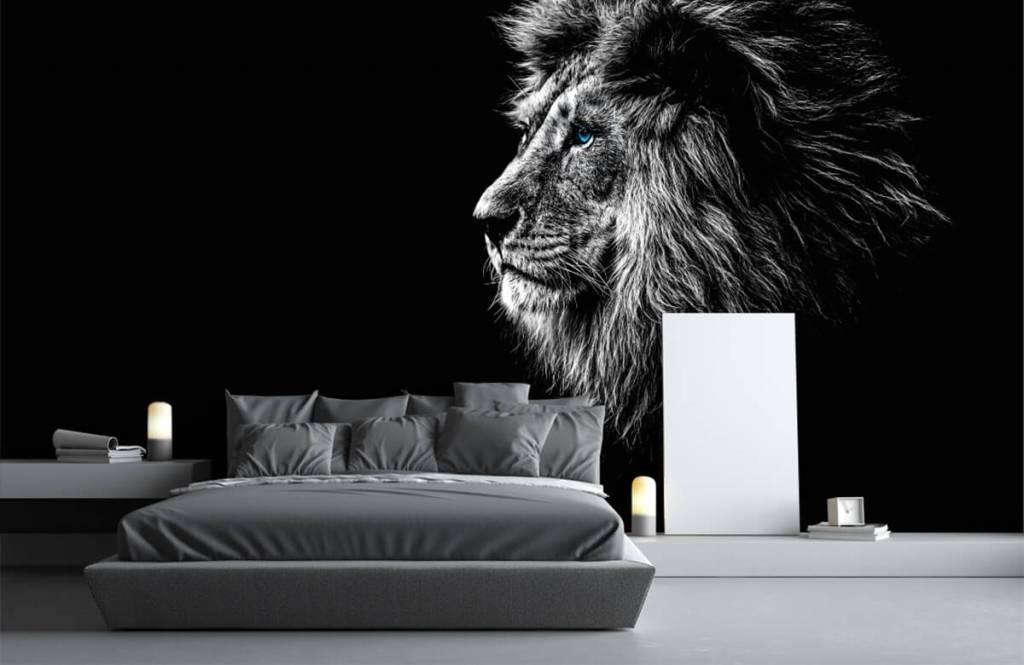 Safari Animals - Lion with blue eyes - Teenage room 3