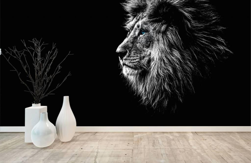 Safari Animals - Lion with blue eyes - Teenage room 8