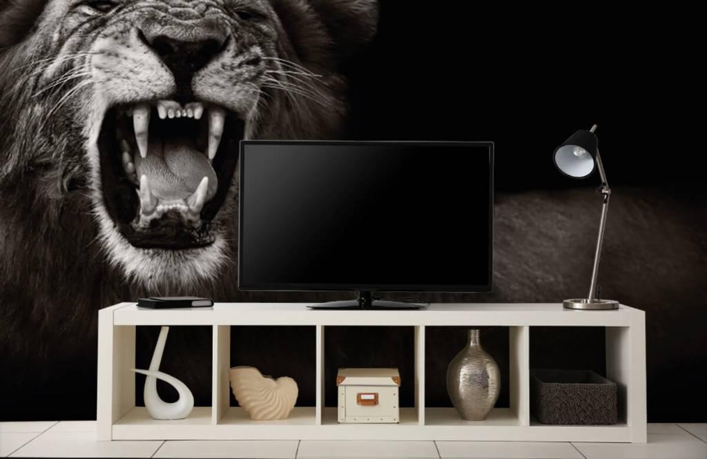 Wild Animals - Lioness - Teenage room 5