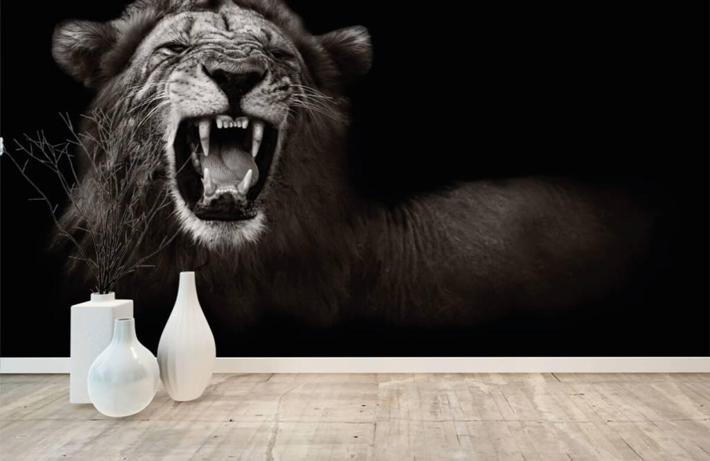 Wild Animals - Lioness - Teenage room 8