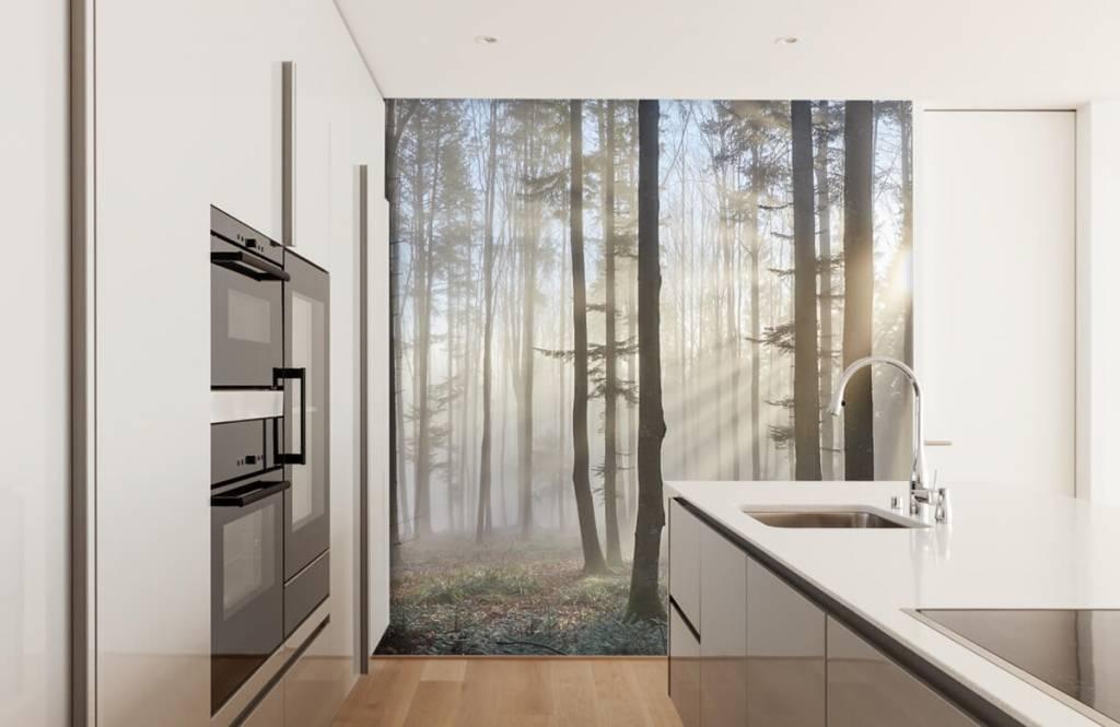 Forest wallpaper - Foggy forest - Bedroom 2