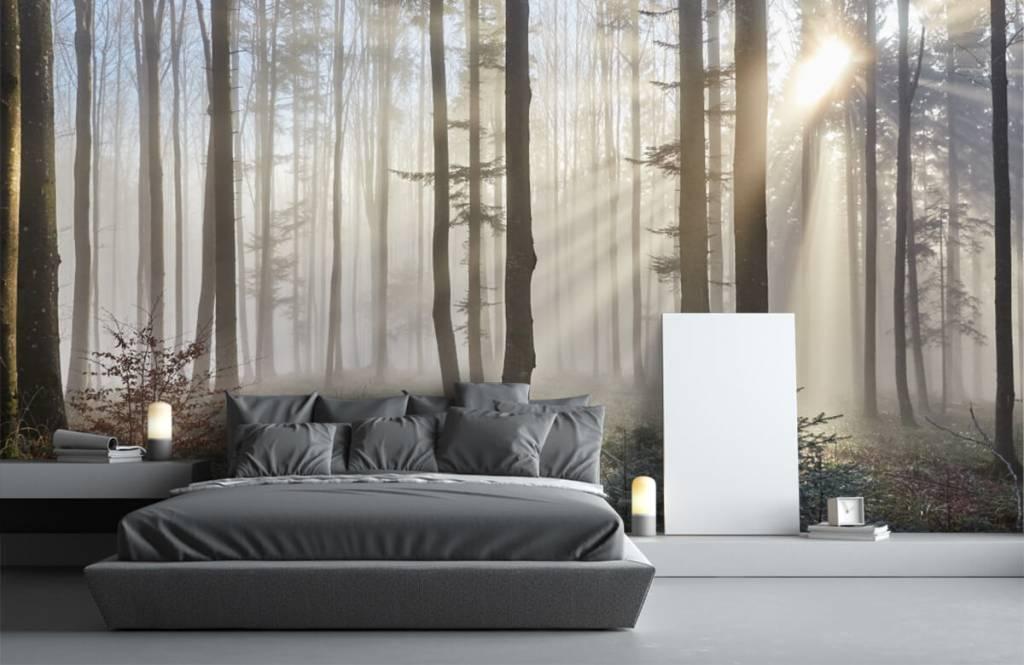 Forest wallpaper - Foggy forest - Bedroom 3
