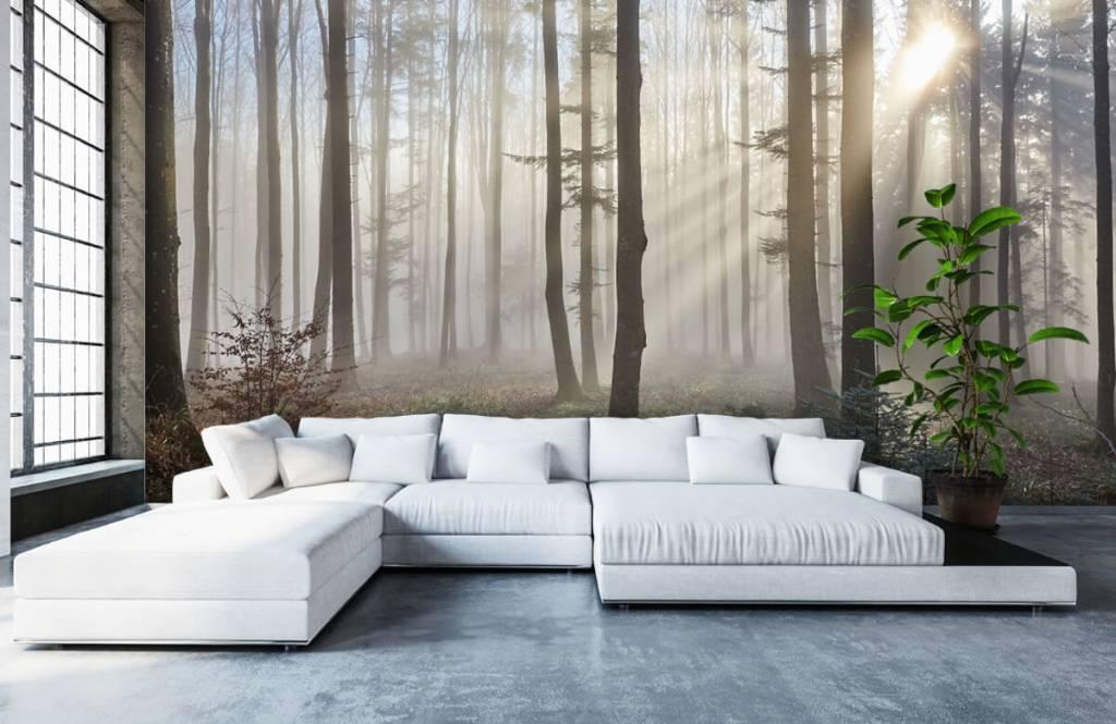 Forest wallpaper - Foggy forest - Bedroom 5