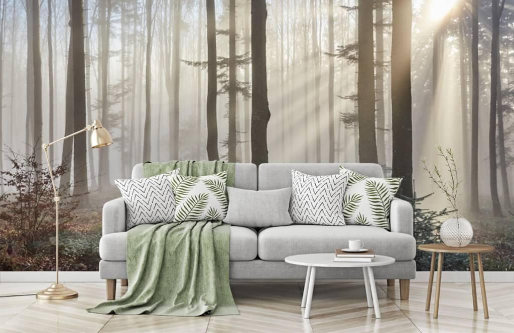 Forest wallpaper - Foggy forest - Bedroom 7