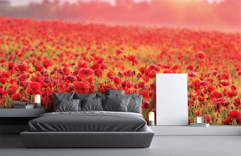 Flower fields - Field full of poppies - Bedroom 1