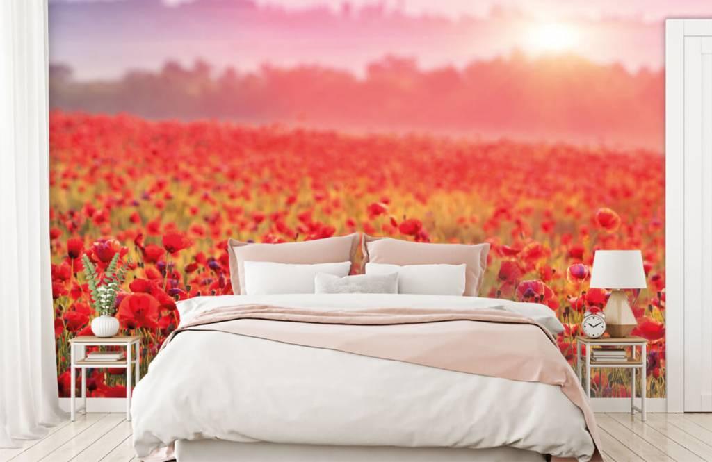 Flower fields - Field full of poppies - Bedroom 2