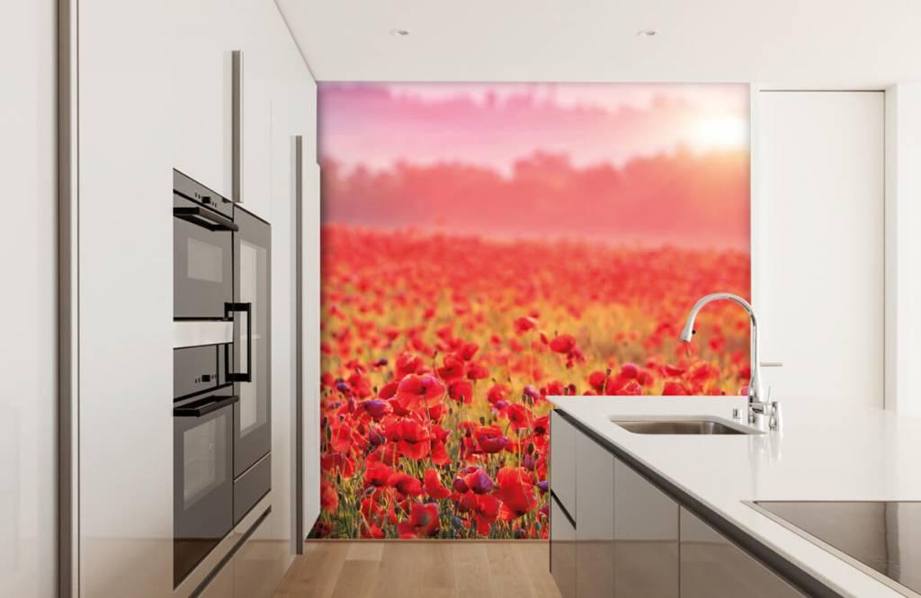 Flower fields - Field full of poppies - Bedroom 3