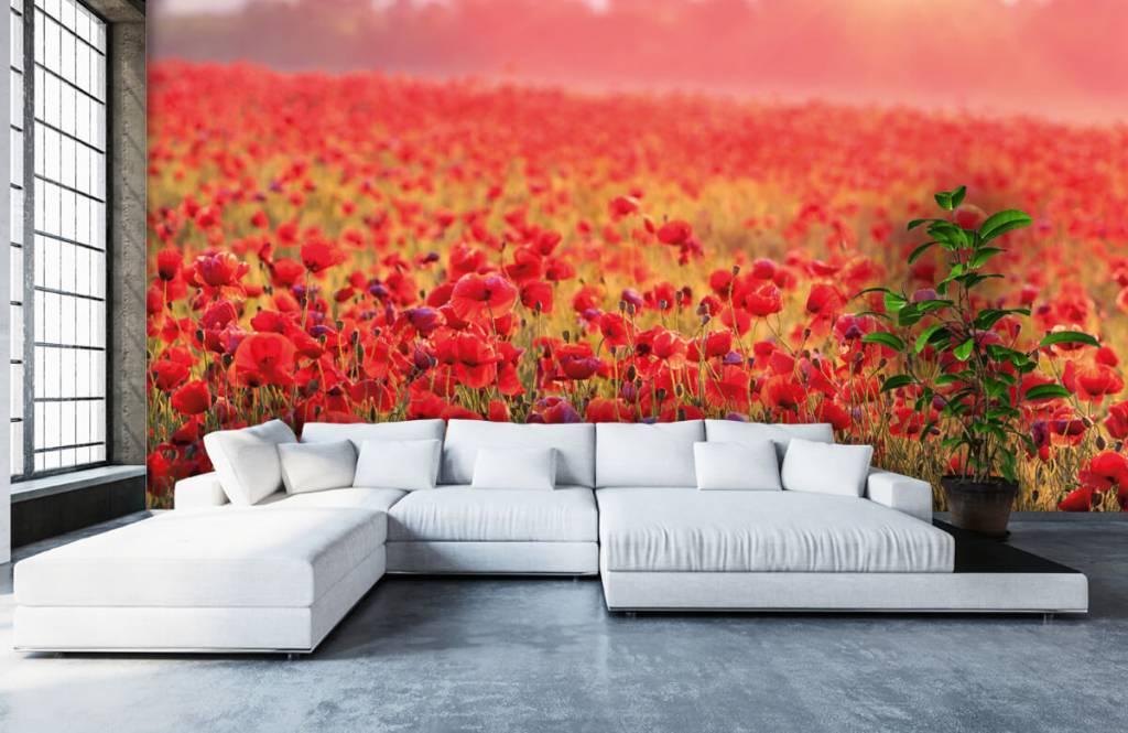 Flower fields - Field full of poppies - Bedroom 5