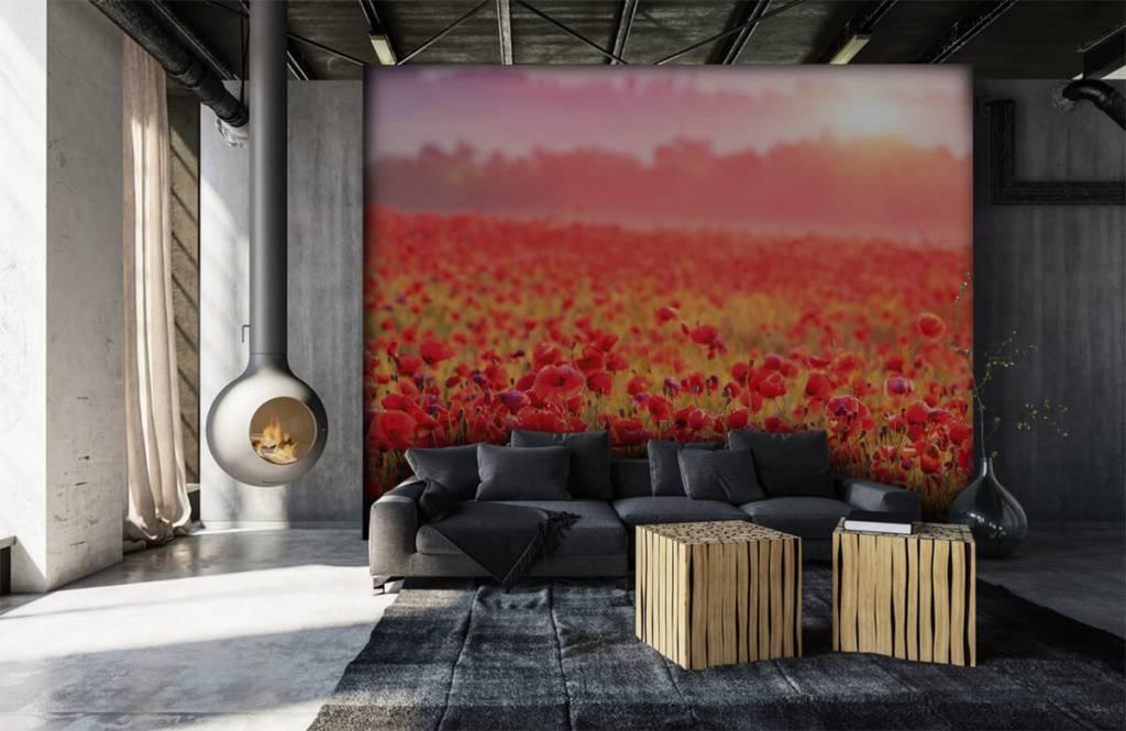 Flower fields - Field full of poppies - Bedroom 6