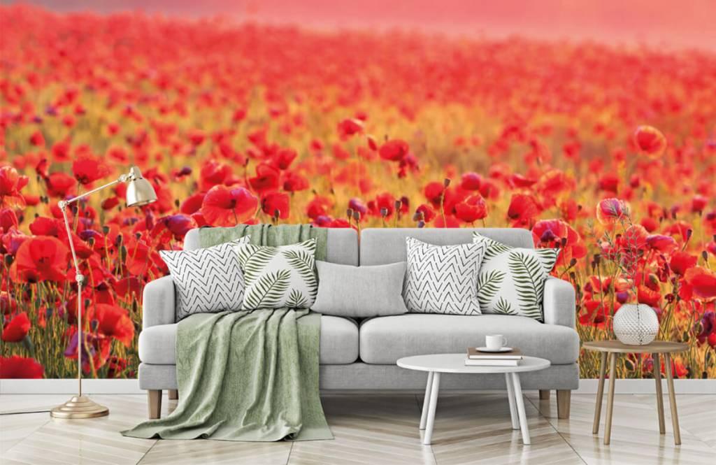 Flower fields - Field full of poppies - Bedroom 7