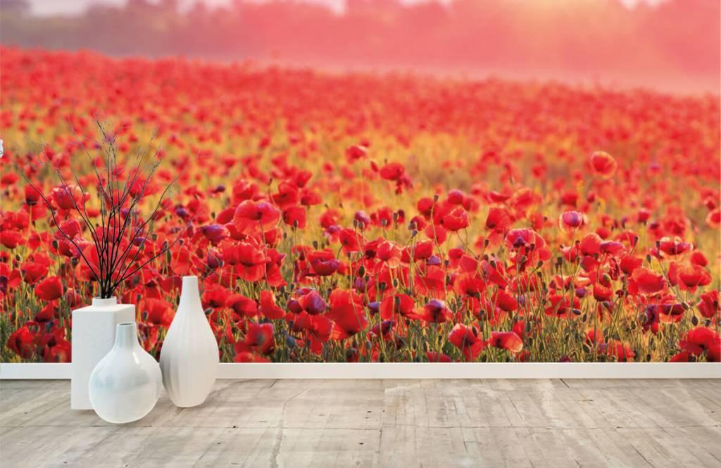 Flower fields - Field full of poppies - Bedroom 8