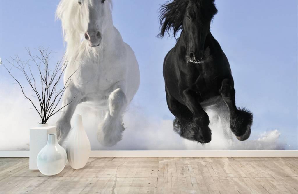 Horses - White and a black horse - Teenage room 1
