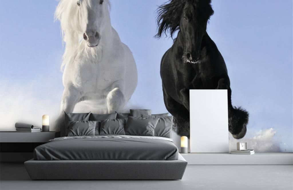Horses - White and a black horse - Teenage room 3