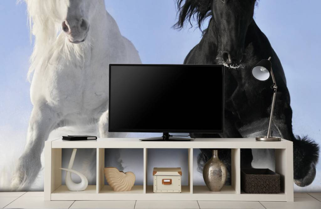 Horses - White and a black horse - Teenage room 5