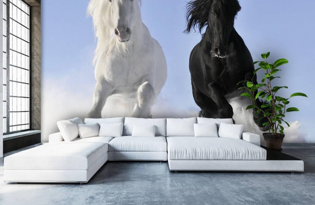 Horses - White and a black horse - Teenage room 6