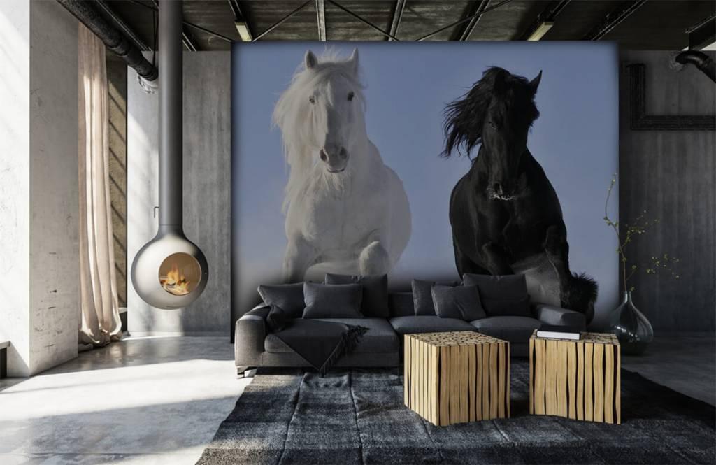 Horses - White and a black horse - Teenage room 7