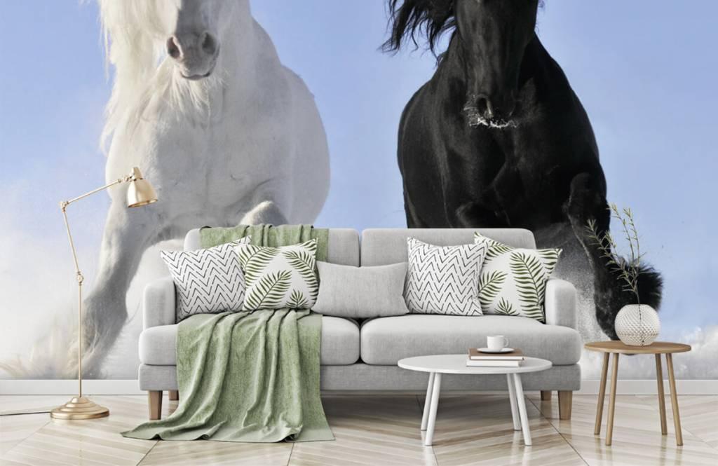 Horses - White and a black horse - Teenage room 8