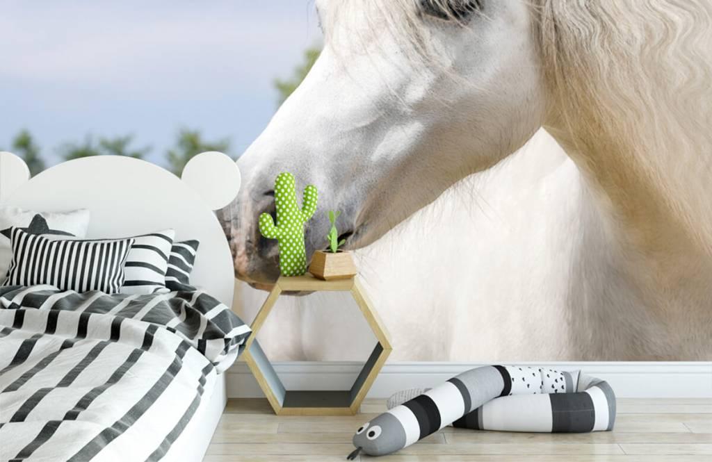 Horses - White unicorn - Children's room 3