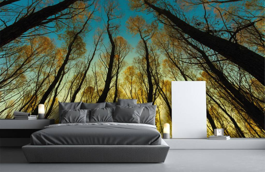 Forest wallpaper - Sunrise between tall trees - Bedroom 1