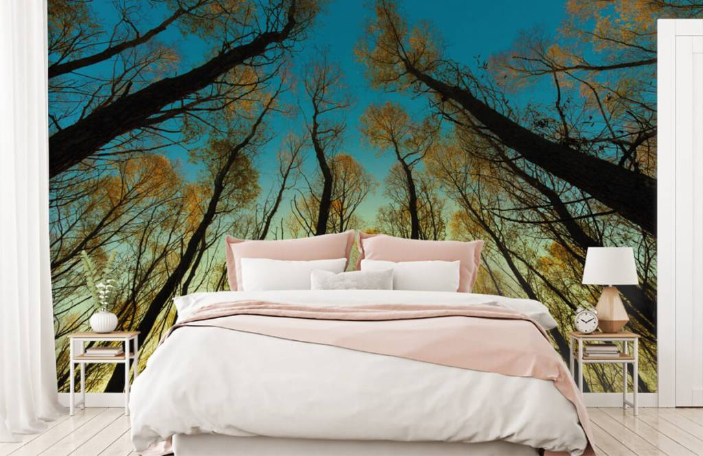 Forest wallpaper - Sunrise between tall trees - Bedroom 2