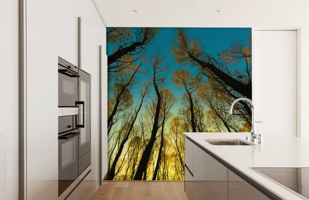 Forest wallpaper - Sunrise between tall trees - Bedroom 3