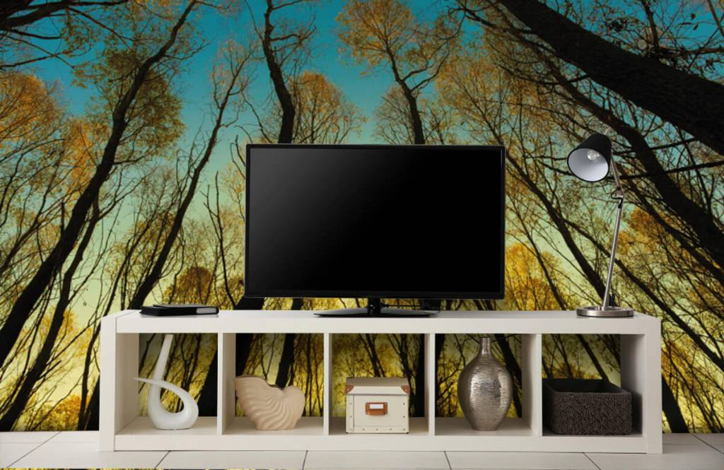 Forest wallpaper - Sunrise between tall trees - Bedroom 4