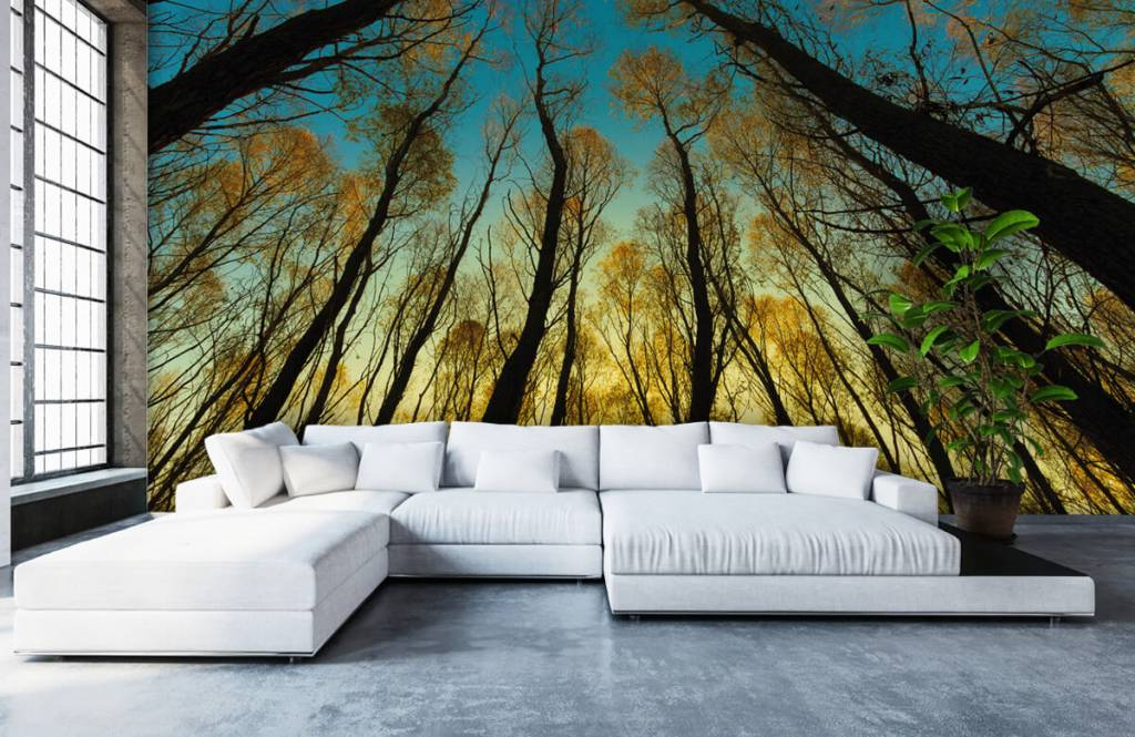 Forest wallpaper - Sunrise between tall trees - Bedroom 5